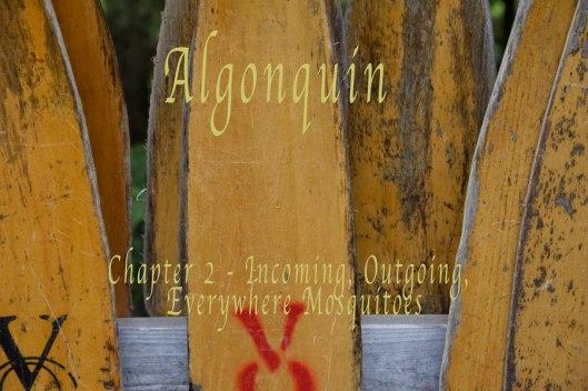 Algonquin-23o