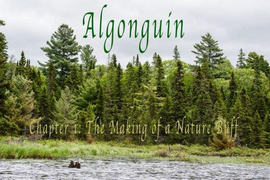 Algonquin-ch-1-headingo