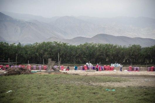 Peru-2015-5099o