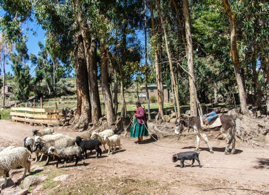 Peru-2015-5249o
